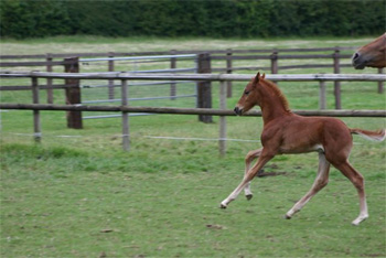 Foal by Don Romantic