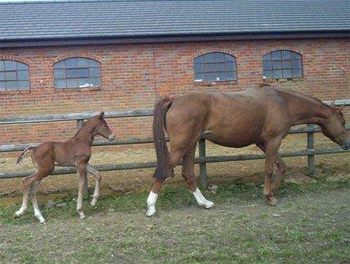 Foal by Don Marco