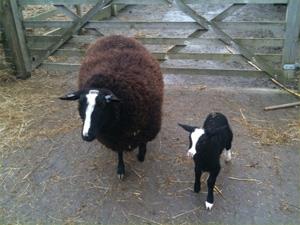 Alice and her lamb Bridget 2011