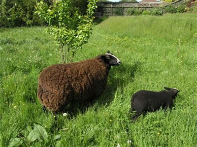 Pango and Alice enjoy the lush grass